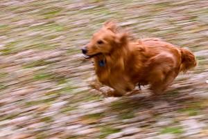 speeddog